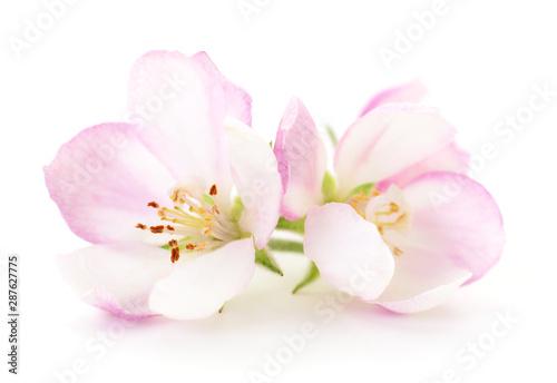 Fototapety, obrazy: Apple flowers on white.
