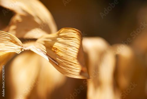 Brown Curled Leaf
