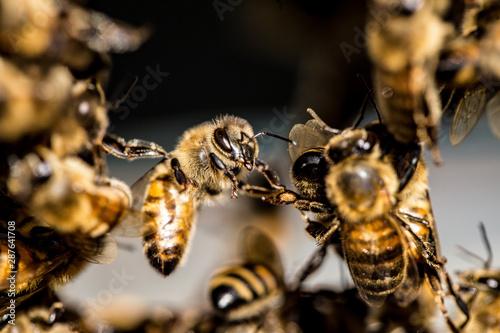 Recess Fitting Bee Festooning bee
