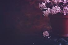 Moody Floral Dark Background. Mystical Deep Red Purple Flower On Black Background