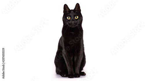 Black cat on a white background Fototapet