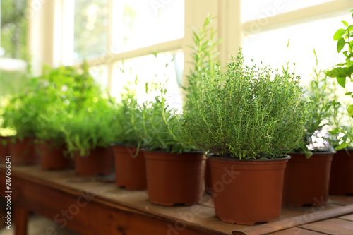obraz lub plakat Fresh potted home plants on wooden window sill, space for text