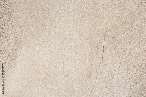Close-up photography of the bone Canvas Print