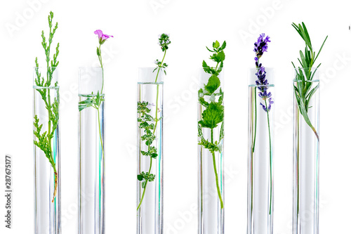 research Concpt on plants, aromatic herbs and flowers in test tubes Canvas Print