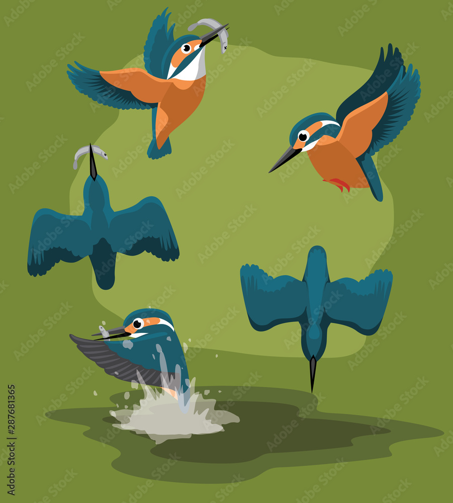 Fototapety, obrazy: Kingfisher catch fishes Cartoon Vector Animation Sequence