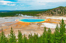 Landscape Of The Grand Prismatic Spring Through A Pine Tree Forest And Distant Silhouettes Of Tourists Walking On The Elevated Walkway, Wyoming, USA, United States Of America.