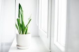 Modern houseplants with white curtain