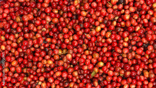close up of fresh coffee beans for background Canvas Print