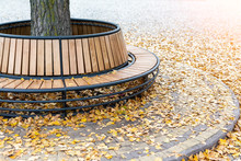 Modern Wooden Circle Shaped Bench Installed Around Tree In City Park Or Street Covered With Bright Golden And Yellow Colored Fallen Leaves In Autumn. Tranquil Beautiful Fall Scene Background
