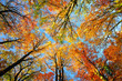 Leinwanddruck Bild - Colorful tree canopy and blue sky in autumn