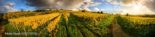 Keuken foto achterwand Honing Panoramic vineyard landscape before sunset