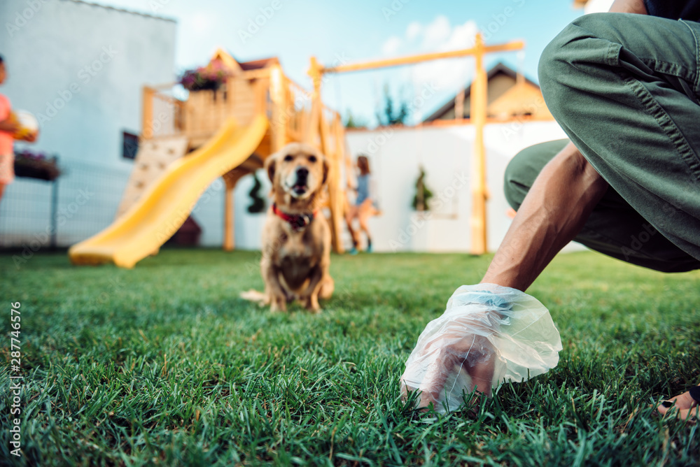 Fototapety, obrazy: Woman picking up dog poop from the lawn
