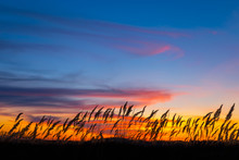 Closeup Prairie Grass Silhouette On The Dramatic Evening Sky Background