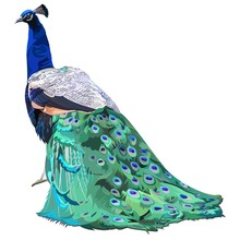 A Peacock With A Lush Tail