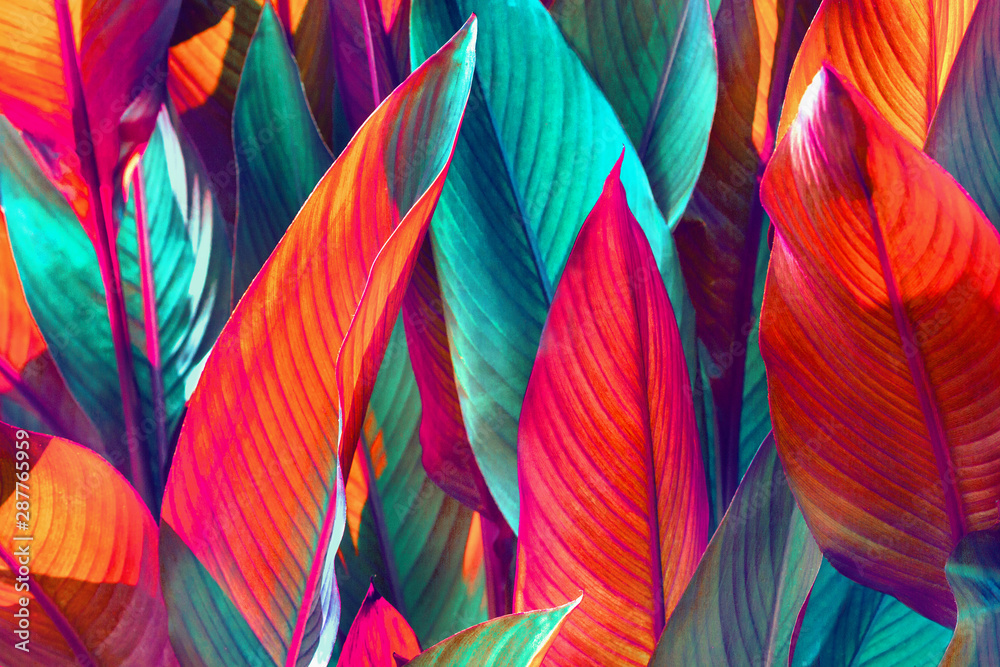 Fototapety, obrazy: background of red and green leaves lit by the sun