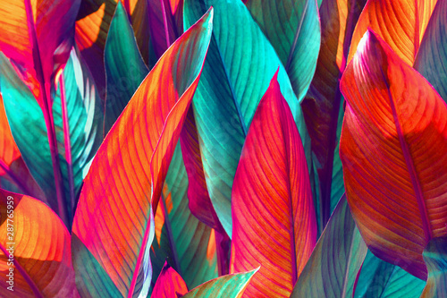 background of red and green leaves lit by the sun Canvas Print