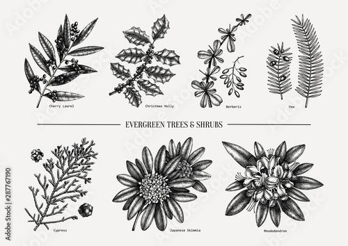 Obraz na płótnie Evergreen trees and shrubs collection