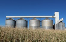 Grain Storage Silos System, Behind A Golden Corn Field  In A Sunny Early Autumn Day