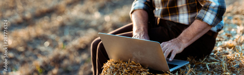 panoramic shot of self-employed man typing on laptop while sitting on bale of ha Canvas Print
