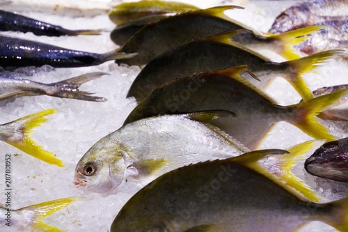 Fotografija Yellow tail scad fishes (Atule mate) in thai supermarket nicely arranged in a ro
