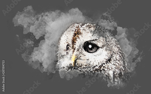 Wall Murals Hand drawn Sketch of animals Watercolor drawing of the owl's head in profile with large eyes with white drawing on a gray sheet of paper