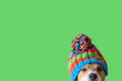 canvas print picture - Concept of pet ready for cold winter weather with dog wearing warm knitted hat