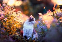 Portrait Beautiful Fluffy Cat ...