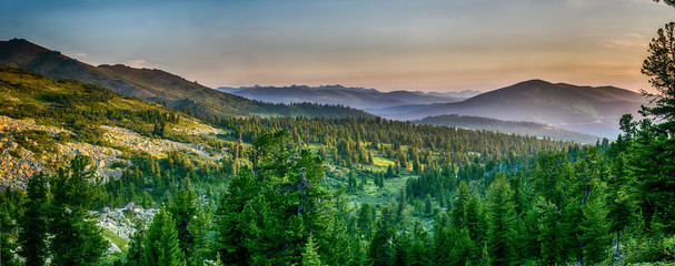Fototapeta Las Beautiful sunset view in cedar forest in front of sayan mountain range, Ergaki national park, Krasnoyarsk region, Siberia, Russia