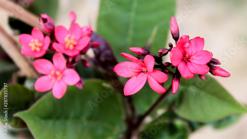 Beautiful Nature Pink Flowers With Leafs Hd Wallpaper Buy This Stock Photo And Explore Similar Images At Adobe Stock Adobe Stock