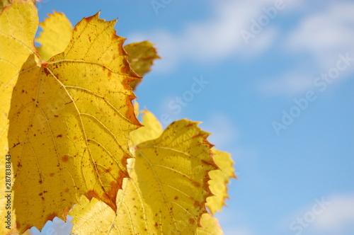 Valokuva  Autumn leaves against the sky