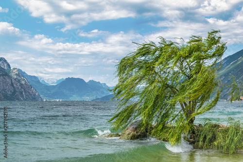 Foto auf Leinwand Blau Jeans Lone Willow tree