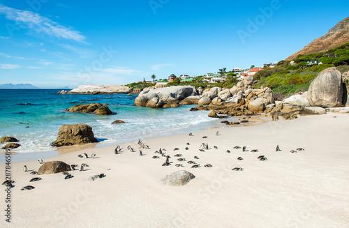 Big boulder rocks and African or Jackass Penguins (Spheniscus Demersus) on Boulder Beach near Cape town, South Africa.