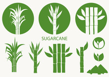 Sugar Cane Set. Cane Plant, Sugarcane Harvest Stalk, Plant And Leaves, Sugar Ingredient Stem. Vector