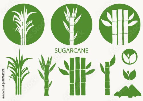Sugar cane set Fototapeta