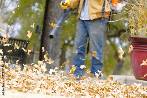 Fototapeta Autumn leaves in yard during fall season with person leaf blowing blurred in background. obraz