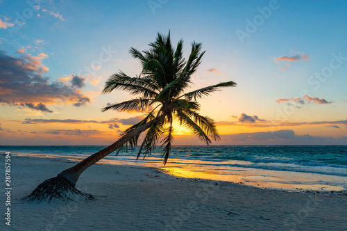 Fototapeta A magic sunrise along the beach of Tulum with the silhouette of a coconut palm tree, Yucatan, Mexico