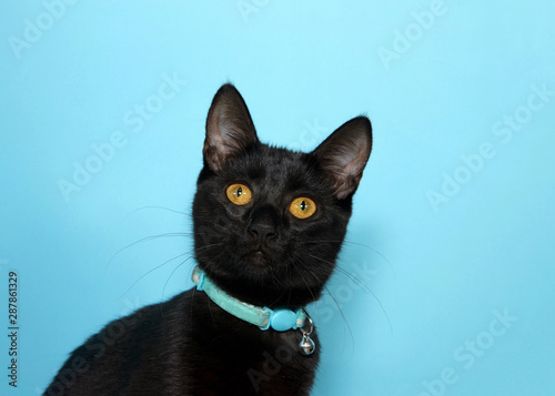 Portrait of an adorable black tabby cat with golden yellow eyes looking at viewer with curious expression. Wearing collar with bell to warn birds. Blue background with copy space. - 287861329