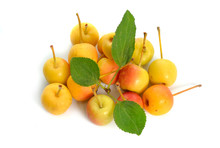 Malus Baccata Known By The Com...