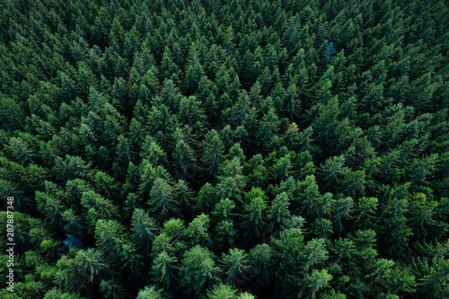 Foto op Aluminium Bomen Forest from above