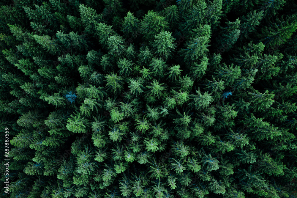 Fototapety, obrazy: Forest from above