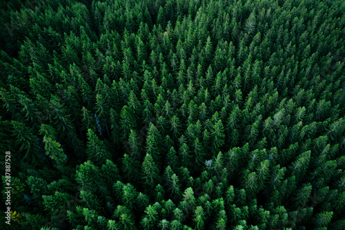 Forets Forest from above