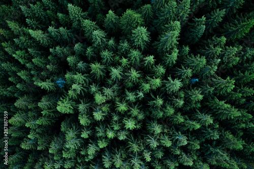 Obraz Forest from above - fototapety do salonu