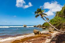 Barbados, An Der Bathsheba Beach.