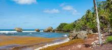 Barbados, An Der Bathsheba Beach Mit Palmen, Felsen Und Blauen Himmel , Panorama.