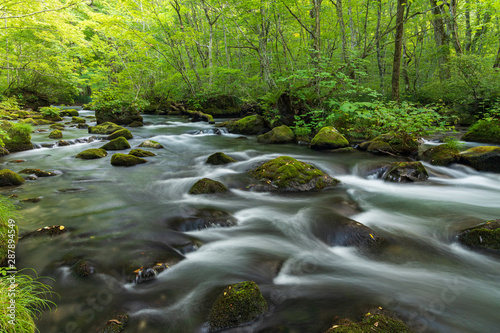 Fototapety, obrazy: Refreshing Oirase mountain stream in autumn