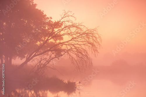 Stampa su Tela  Old dry trees and oaks on autumn foggy rural sunrise