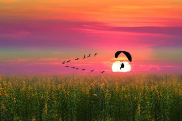 Fototapetasunset flying birds and silhouette paramotor over sun hemp field