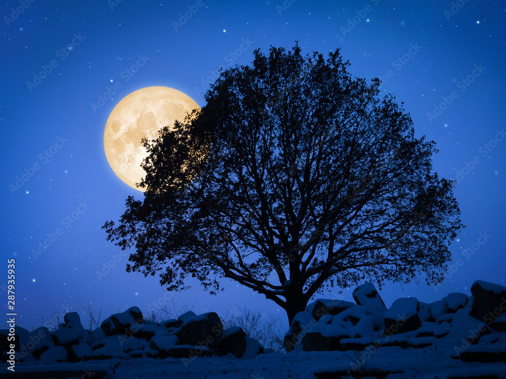 Fototapeta a tree at night with pale moon