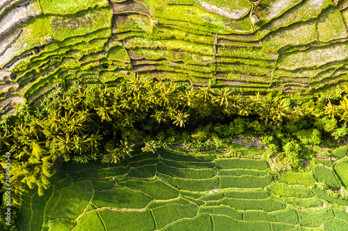 Fotobehang Rijstvelden Aerial view of tropical rice terrace fields surrounded by palm trees at sunrise, Bali, Indonesia