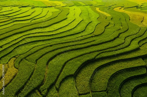Cadres-photo bureau Les champs de riz Paddy rice terraces, agricultural fields in countryside or rural area of Mu Cang Chai, Yen Bai, mountain hills valley on summer in South East Asia, Vietnam. Nature landscape background.